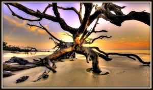 driftwood beach1